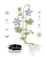 croquis ensemble décoratif floral. dessins de fleurs d'ancolie. art de la ligne vintage isolé sur fond blanc. illustrations botaniques dessinées à la main. vecteur d'éléments.