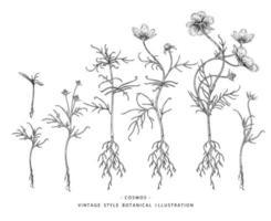 éléments botaniques dessinés à la main fleur cosmos