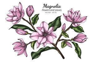 Fleur de magnolia rose et feuille dessin illustration avec dessin au trait sur fond blanc vecteur