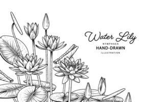 Illustrations botaniques dessinées à la main de fleur de nénuphar.