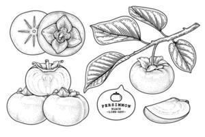 ensemble de fuyu kaki fruits éléments dessinés à la main illustration botanique vecteur