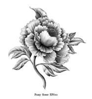 Illustration de gravure ancienne de fleur de pivoine dessin style vintage art noir et blanc isolé sur fond blanc vecteur