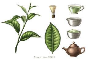Main de collection de thé vert dessin art de style de gravure isolé sur fond blanc vecteur