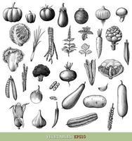 Main de collection de légumes dessiner gravure art noir et blanc de style vintage isolé sur fond blanc vecteur