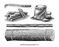 Illustration de la collection de canne à sucre style gravure vintage art noir et blanc isolé sur fond blanc vecteur