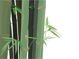 fond de bambou sur le vecteur graphique illustration
