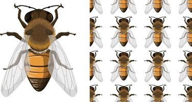 abeille à miel et fond sans bruit vecteur