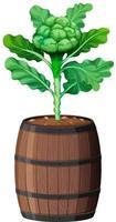 Brocoli avec des feuilles dans un pot en bois isolé sur fond blanc vecteur
