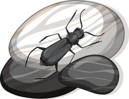Vue de dessus de l'insecte sur une pierre sur fond blanc
