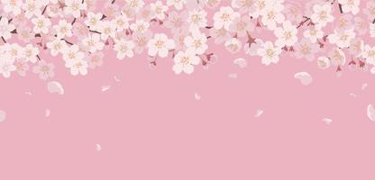 fond floral transparent avec des fleurs de cerisier en pleine floraison sur fond rose. reproductible horizontalement. vecteur