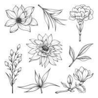 illustration de fleurs et de feuilles sauvages et herbes dessinés à la main isolée sur fond blanc. vecteur
