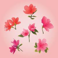 Clipart de belles fleurs d'azalée vecteur