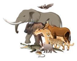 Groupe d'animaux sauvages africains sur fond blanc vecteur
