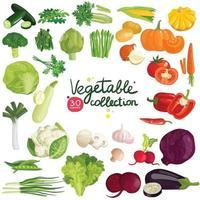 ensemble d'herbes de légumes vecteur
