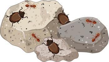 Vue de dessus des insectes et des fourmis sur des feuilles de pierres isolées vecteur