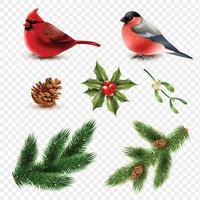 Ensemble de branches de sapin cardinal rouge bouvreuil oiseaux d'hiver vecteur
