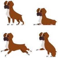 chien boxer dans différentes poses. vecteur