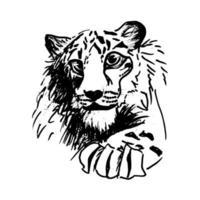 tigre à couver de vecteur