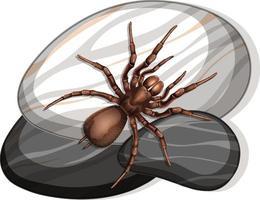 Vue de dessus de l'araignée sur une pierre sur fond blanc