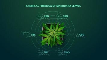 affiche verte avec des formules chimiques de cannabinoïdes naturels. plante de cannabis avec infographie de formules chimiques de cannabinoïdes dans un style numérique vecteur