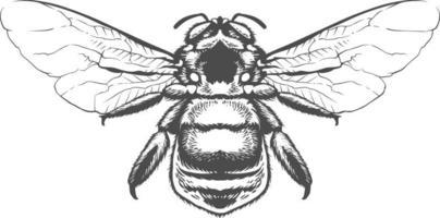 insecte de gravure de vecteur