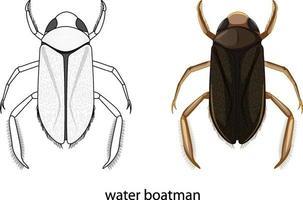 Insecte de batelier d'eau en couleur et doodle isolé vecteur