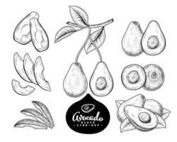 croquis de vecteur avocat fruit dessiné à la main ensemble décoratif botanique