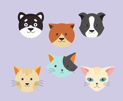 Tête de chiots et de chatons