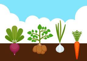 Vecteurs de légumes potagers exceptionnels vecteur
