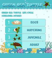 diagramme montrant le cycle de vie de la tortue vecteur