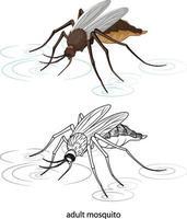moustique en couleur et doodle sur fond blanc