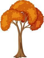 arbre automne isolé sur fond blanc