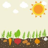 Jardin de légumes vecteur