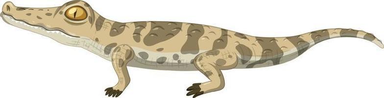 bébé crocodile isolé sur fond blanc vecteur
