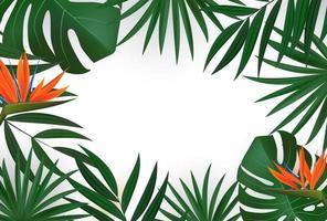 feuilles de palmier tropical réaliste naturel sur fond blanc.