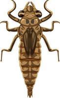 Dragonfly beetle isolé sur fond blanc vecteur