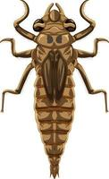 Dragonfly beetle isolé sur fond blanc