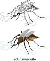 moustique en couleur et doodle sur fond blanc vecteur