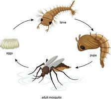 Diagramme montrant le cycle de vie des moustiques sur fond blanc