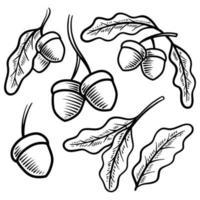illustration vectorielle vintage de gland dessiné à la main vecteur