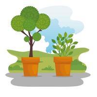 plantes en pot à l'extérieur