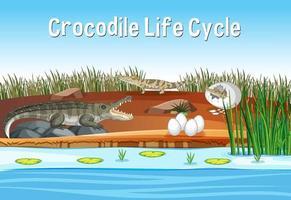 scène avec cycle de vie de crocodile vecteur