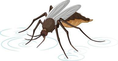 moustique isolé sur fond blanc vecteur