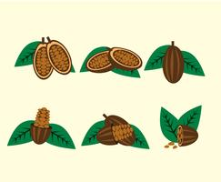 Vecteur de haricots cacao