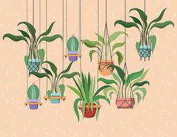plantes d'intérieur dans des cintres en macramé