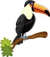 Oiseau toucan sur une branche isolée sur fond blanc vecteur