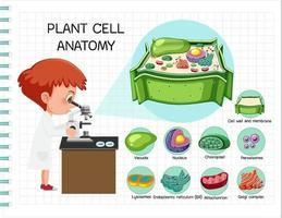 anatomie du diagramme de biologie des cellules végétales vecteur