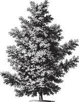 illustrations vintage de chêne vecteur