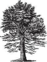 illustrations vintage de sapin argenté vecteur