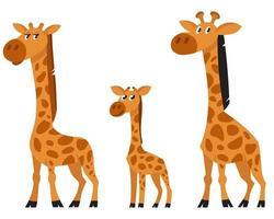 vue de trois quarts de la famille girafe. vecteur